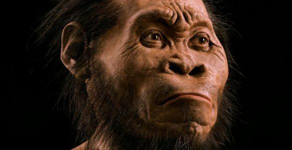 Ape human