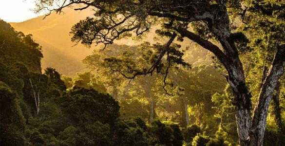 Where was the Garden of Eden located?