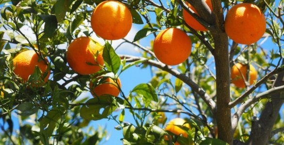 Trees yield fruit only if God wants them to