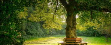Living under your fig tree in God's glorious future