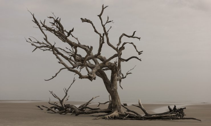 Don't consider yourself a dry tree