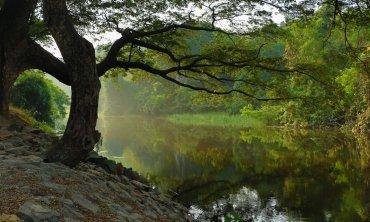 Abundant trees on the new earth